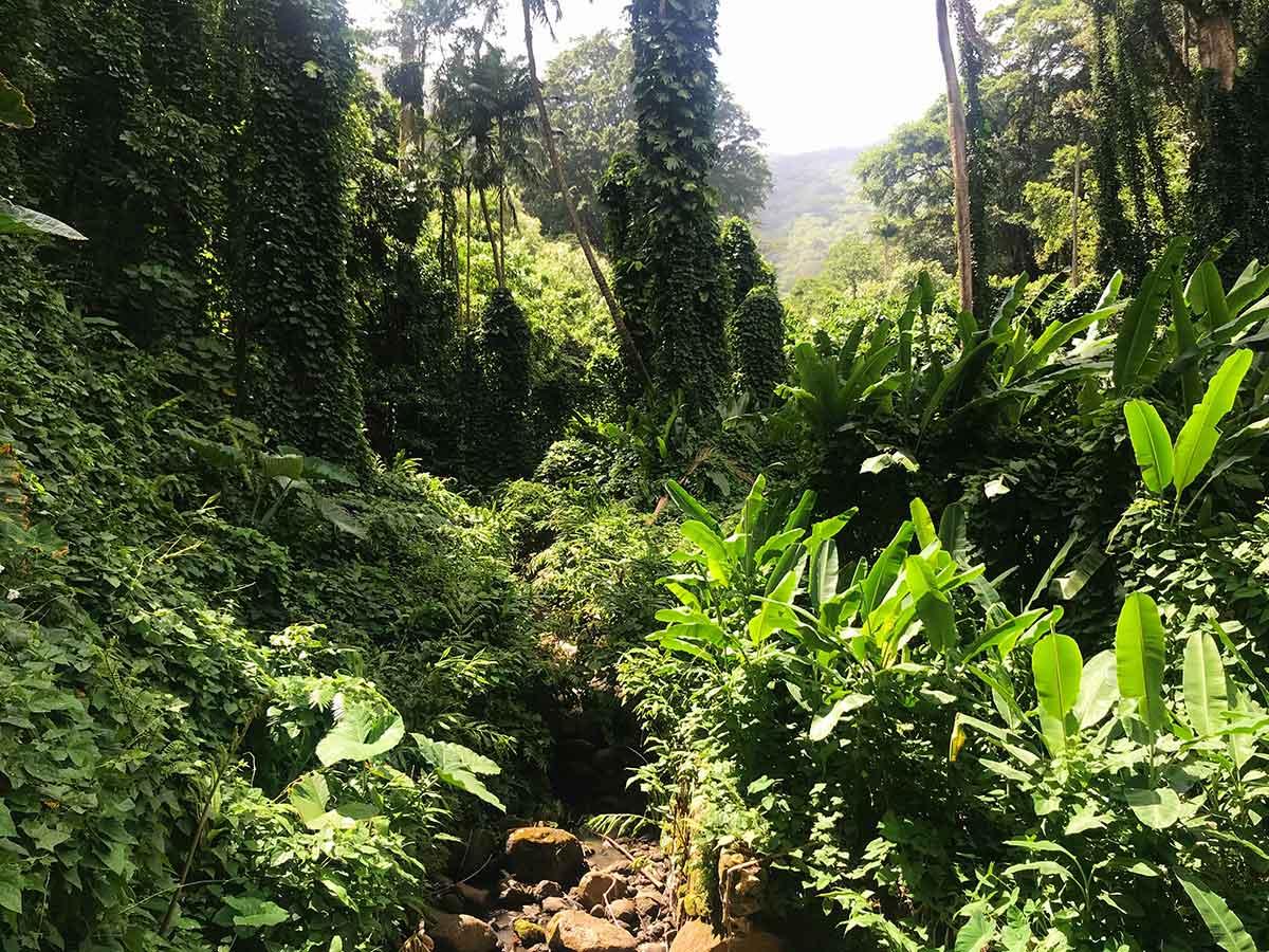 Rainforest Oahu